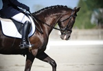 Surrey Equestrian competitor rises to top of dressage competition