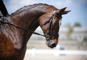 Duncan Para-Dressage competitor wins second gold medal
